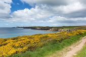 Pembrokeshire Coast Path Caerfai Bay West Wales UK near St Davids and in the National Park