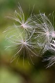 Flying Pappus