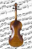 Violin Back