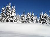 Verschneite Hemlock