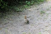 stock photo of matinee  - a Rabbit walking alone In The Woods