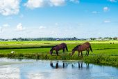 Horses On A Bank