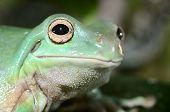 Colorful Frog In Terrarium