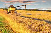 stock photo of combine  - Harvesting combine cropping cereal field lit by aoutumn sun - JPG