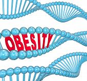 foto of medical condition  - The word Obesity in red letters hidden within a blue DNA strand to illustrate the hereditary nature of fat and the condition of being very heavy - JPG