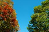 Colorful Maple Leaf And Sky