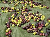 Fresh Ripe Olives