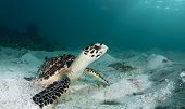 Sea Turtle in the Sand