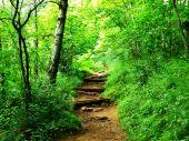 Mt Pisgah Hiking Trail
