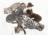 Seven Cat Babies