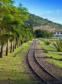 pic of gage  - The ancient narrow gage railwayin tropical park - JPG