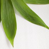 Detail Of Fresh Green Bamboo Leaves