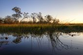 Panorama of Okavango delta in Botswana, Africa