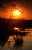 Panorama of Okavango delta in sunset, Botswana, Africa
