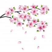 stock photo of eastern culture  - Blossoming branch of sakura  - JPG