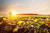 scenery of west lake with sunset,hangzhou