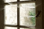 picture of cobweb  - old window with cobwebs - JPG