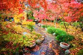 Autumn Japanese garden with maple