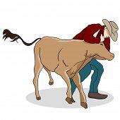 An image of a cowboy wrangling a calf.