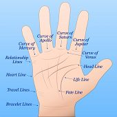 stock photo of palmistry  - Palmistry  - JPG
