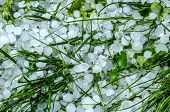 foto of hail  - Hail ice balls in grass after a heavy rain - JPG