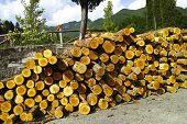 Pile Of Log