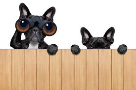 image of snoopy  - father and son dogs spying behind wood fence - JPG