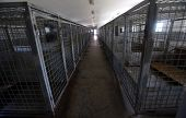 picture of castrated  - Cages designed for ownerless dogs found in the city - JPG