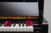 Two Red Roses On Piano Keyboard
