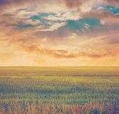 fields isolated on white background, retro filtered, instagram style