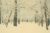 frozen forest covered with snow, retro filtered, instagram style