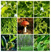 Green summer forest detail with mushroom