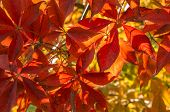 Red Leaves In The Sun