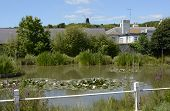 Village Pond At Rottingdean. Sussex. England