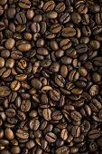 Fresh Coffee Beans Background Macro