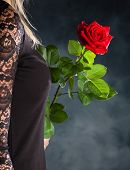 a young woman in evening dress with a red rose. photo icon for valentine's day, romance and wedding day