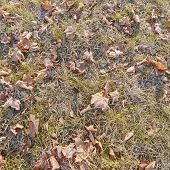 Frozen Grass And Leaves.