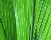big green leaf.