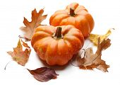 Ripe pumpkin isolated on white