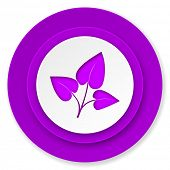 leaf icon, violet button, nature sign