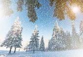 Fantastic mountain landscape glowing by sunlight. Dramatic wintry scene. Carpathian, Ukraine, Europe. Beauty world. Retro filter. Instagram toning effect. Happy New Year!