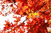Beautiful autumn leaves, close-up
