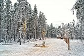 Sledge At Snow Valley In Finnish Lapland In Winter