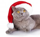 cat wearing a santa hat on white background