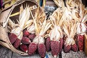 Decorative Red Corn at Market