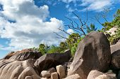 Close up Green Plants and Grasses on Huge Rock Forms at Seychelles. Captured with Blue and White Clouds Background.