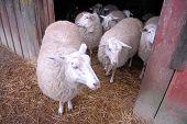 stock photo of dairy barn  - NAPAVINE - JPG
