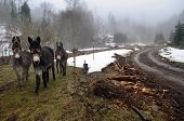 picture of horses ass  - Donkeys gather for warmth during a cloudy day in the mountains - JPG