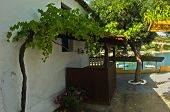 Small house by the sea in a shade of vines and olives at Sithonia