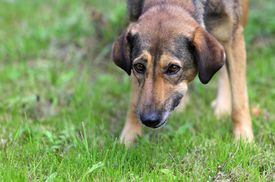 image of castration  - Homeless dog on a fresh green meadow - JPG